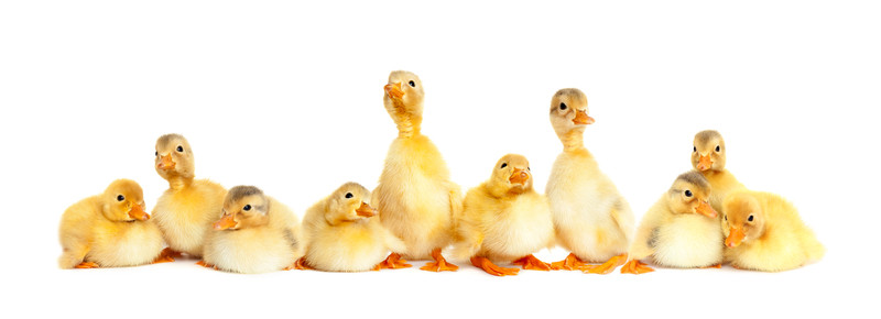 Creating Great Infographics: How To Get Your Ducks in a Row